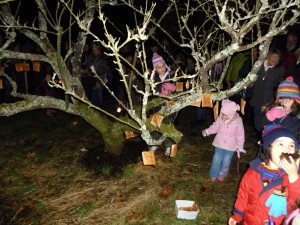 Wassail toast hangs from the trees