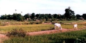 Killing fields outside Phnom Penh in Kampuchea/Cambodia