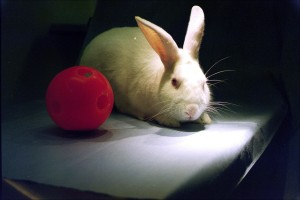 Rabbits and their habits taught to young girls