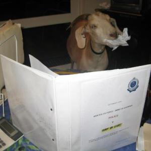 Gary The Goat reads the charges against him