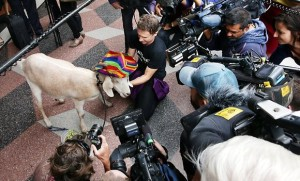 Gary The Goat, caught in a media scrum outside court