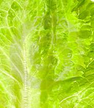 LettuceLeaf