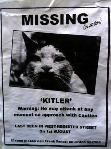 Has anyone seen Kitler? Lost in Edinburgh.