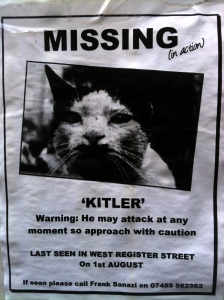 Has anyone seen Kitler? Lost in Edinburgh.