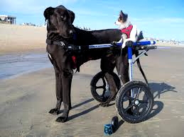 As illustrated on doggiewheelchair.com
