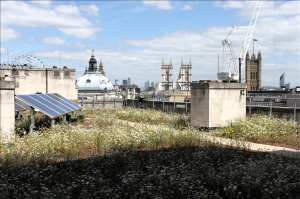 Transport for London's biodiverse green roof on its HQ in Victoria. Designed by Dusty Gedge of GRC (Photo by GRC)