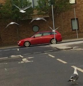 Four seagulls on a bombing run last night in Edinburgh