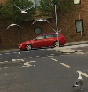 Four seagulls on a bombing run last night in Edinburgh