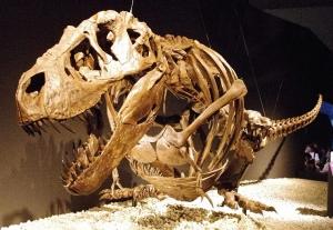 Did Tyrannosaurus Rexes hallucinate on prehistoric acid trips?