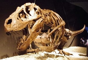 Did Tyrannosaurus Rexes hallucinate on prehistoric acid trips?