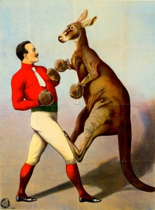 A kangaroo boxing poster from the 1890s